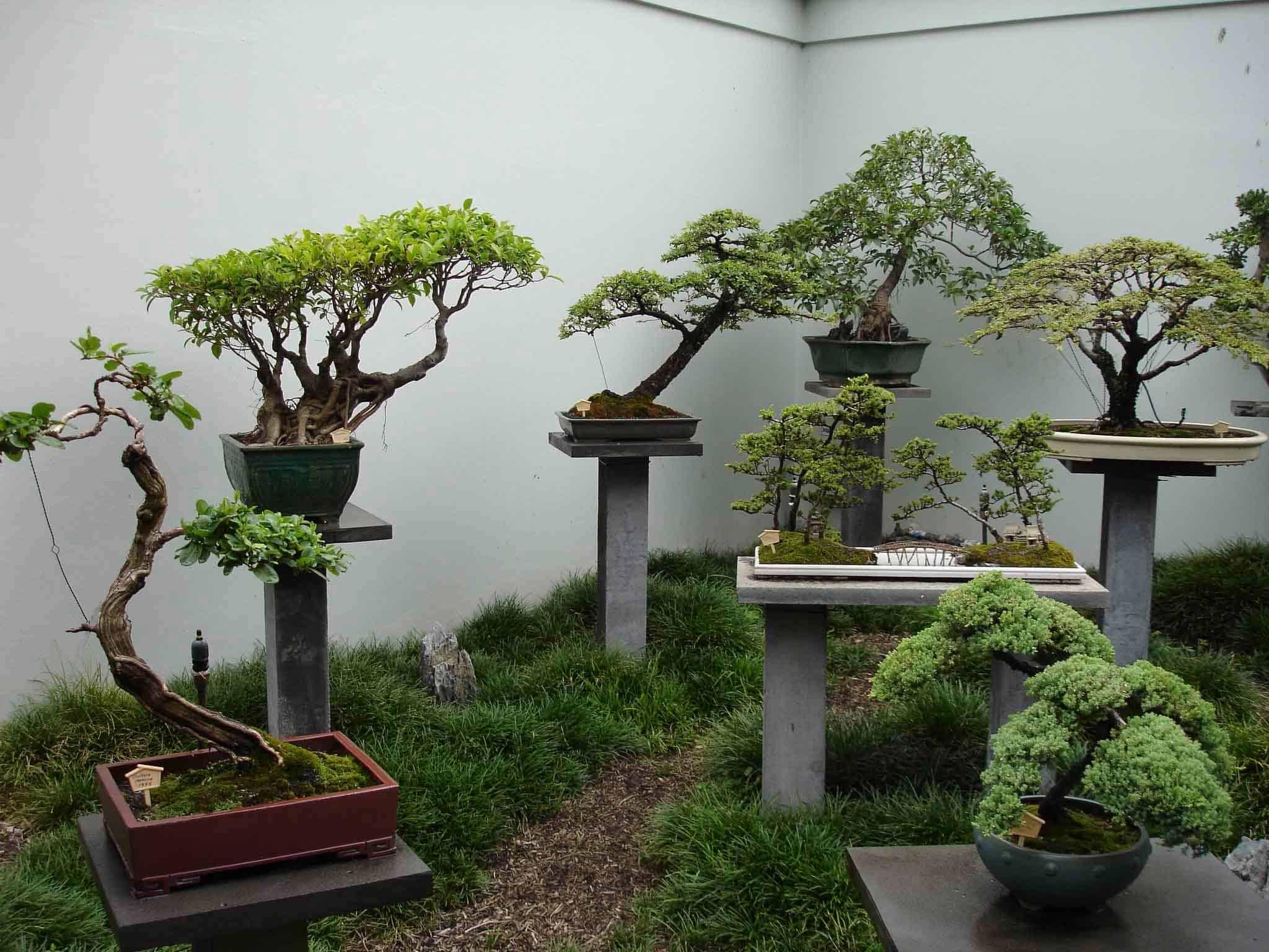 Terraria как вырастить дерево
