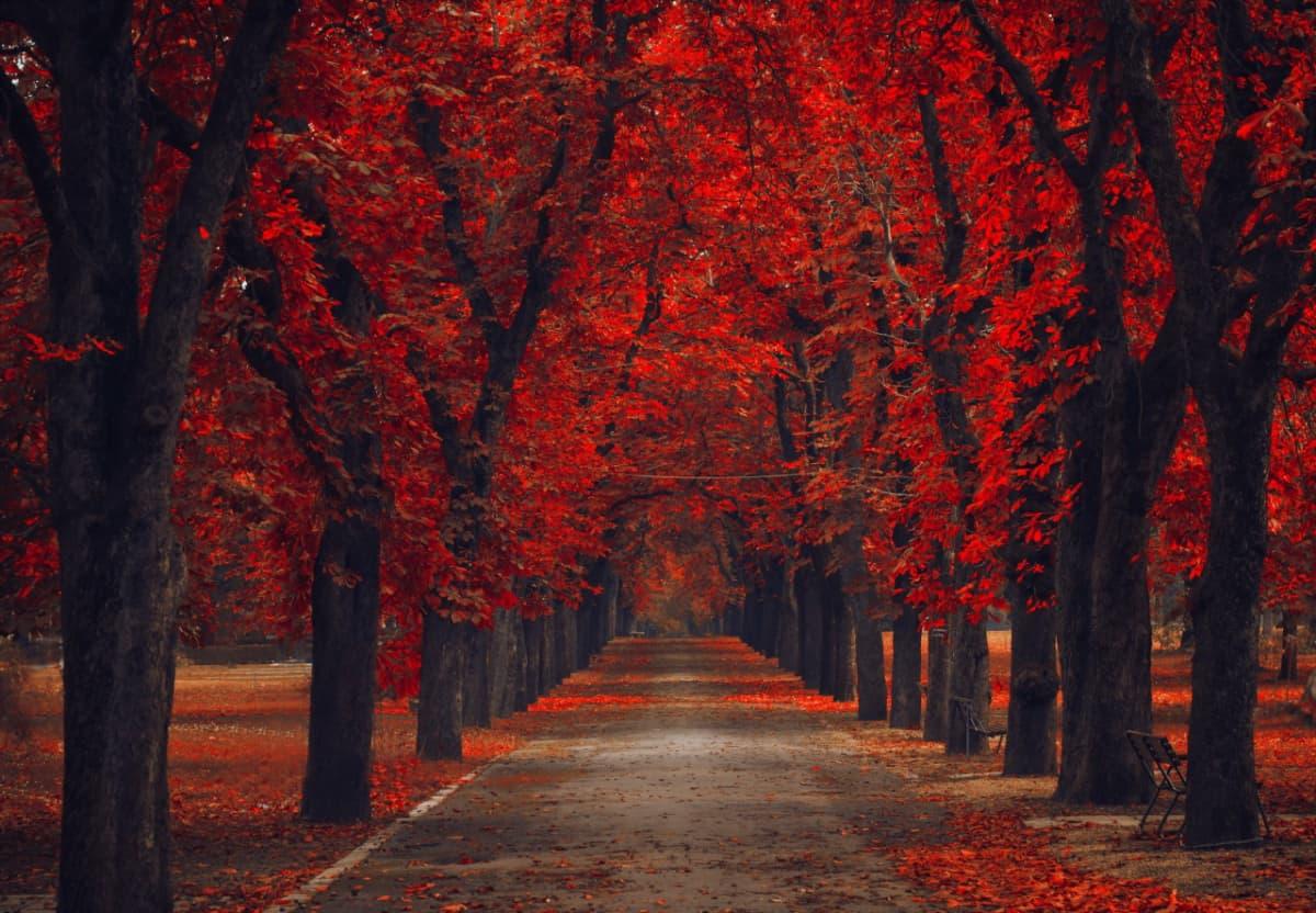Виды кленовых листьев