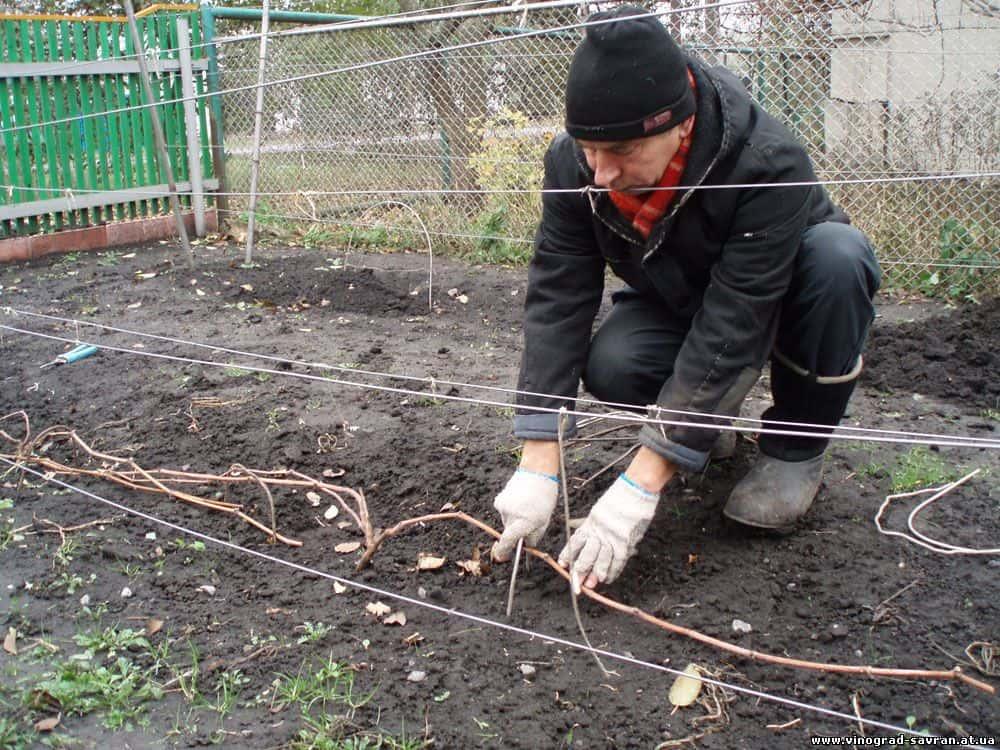 Агроволокно для винограда