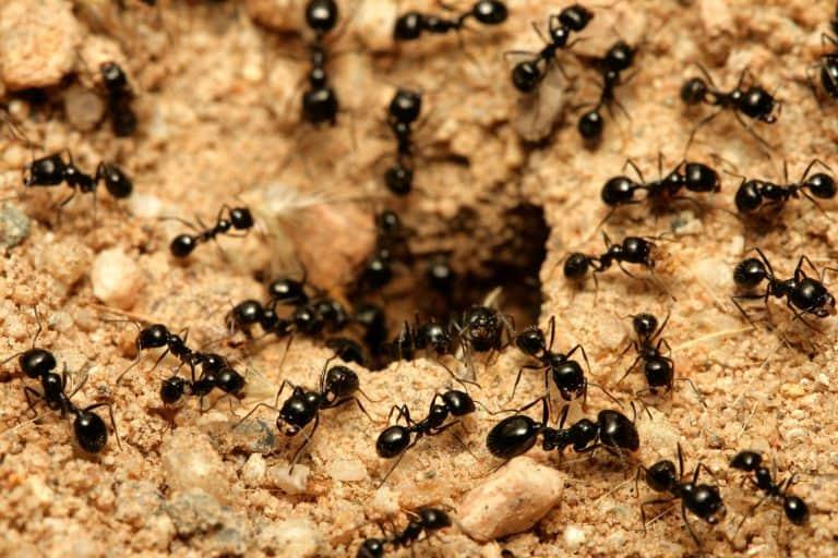 Как избавиться от муравьев в теплице навсегда