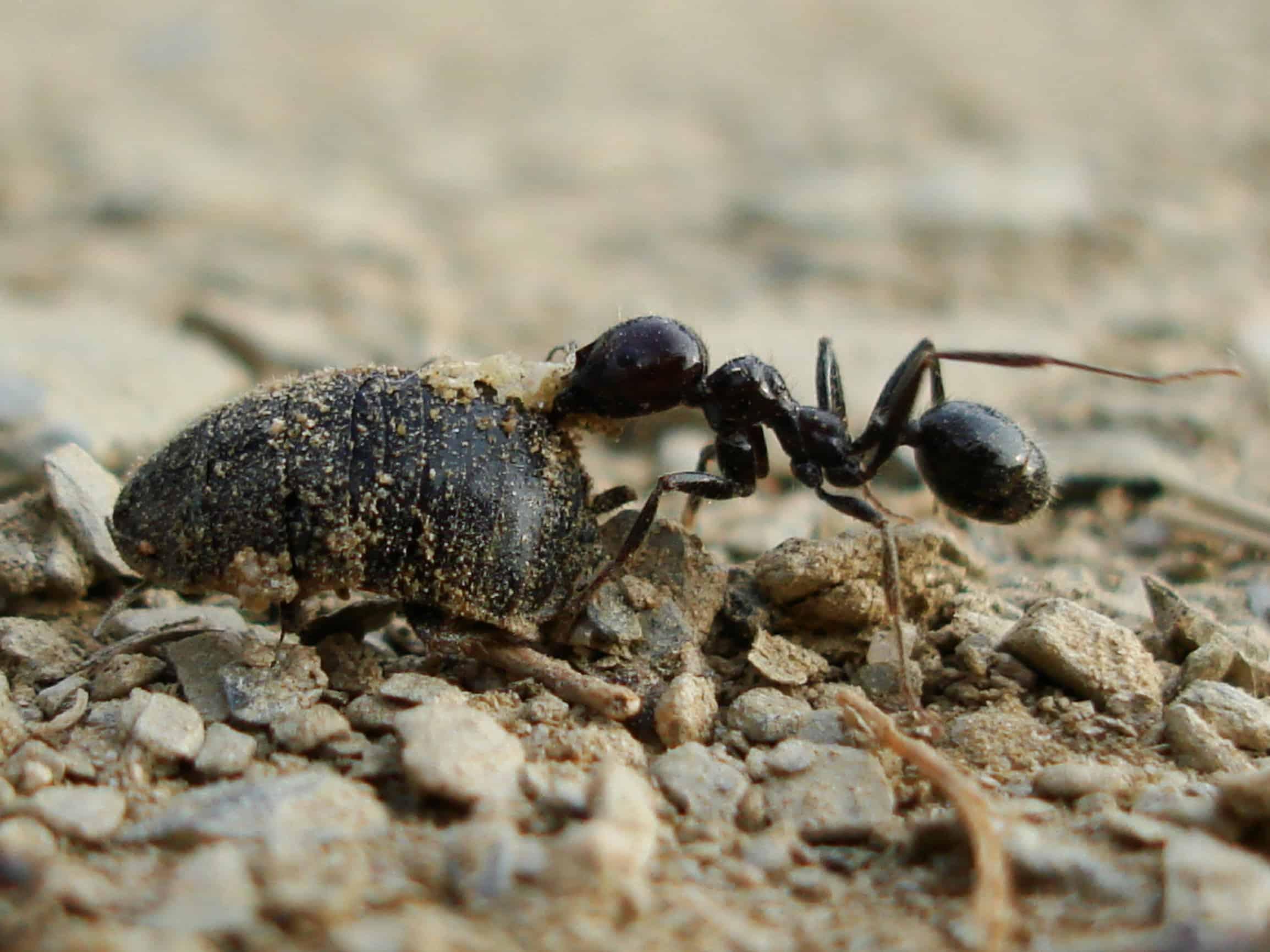 муравьи в саду картинки запомнился посетителям форума