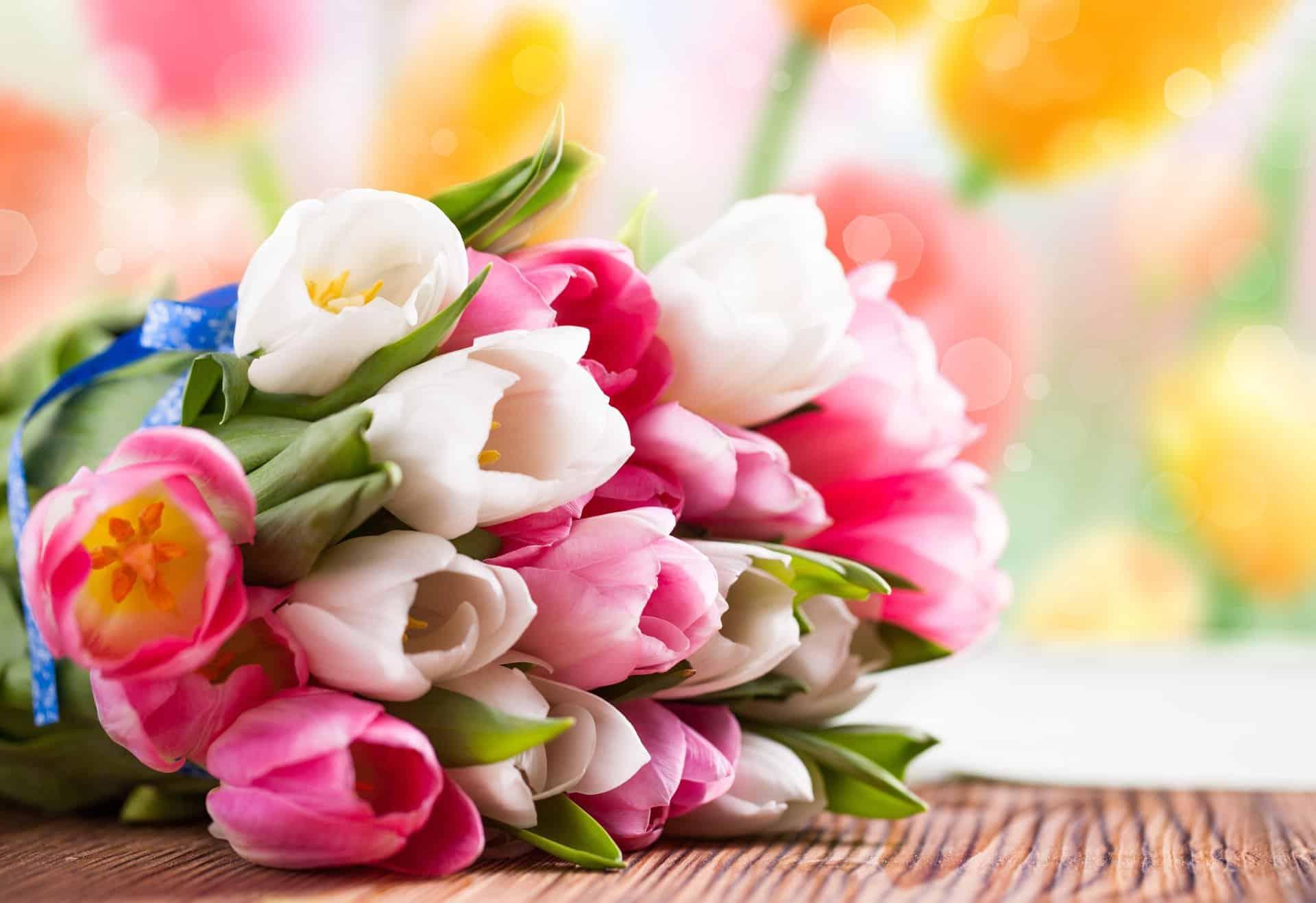 Секреты выращивания тюльпанов: советы опытного цветовода