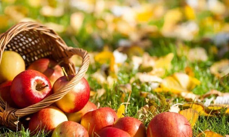 Как посадить яблоню осенью пошаговое руководство