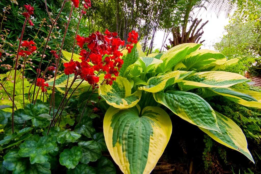 Теневыносливые растения: фото цветов и кустарников для сада и дома