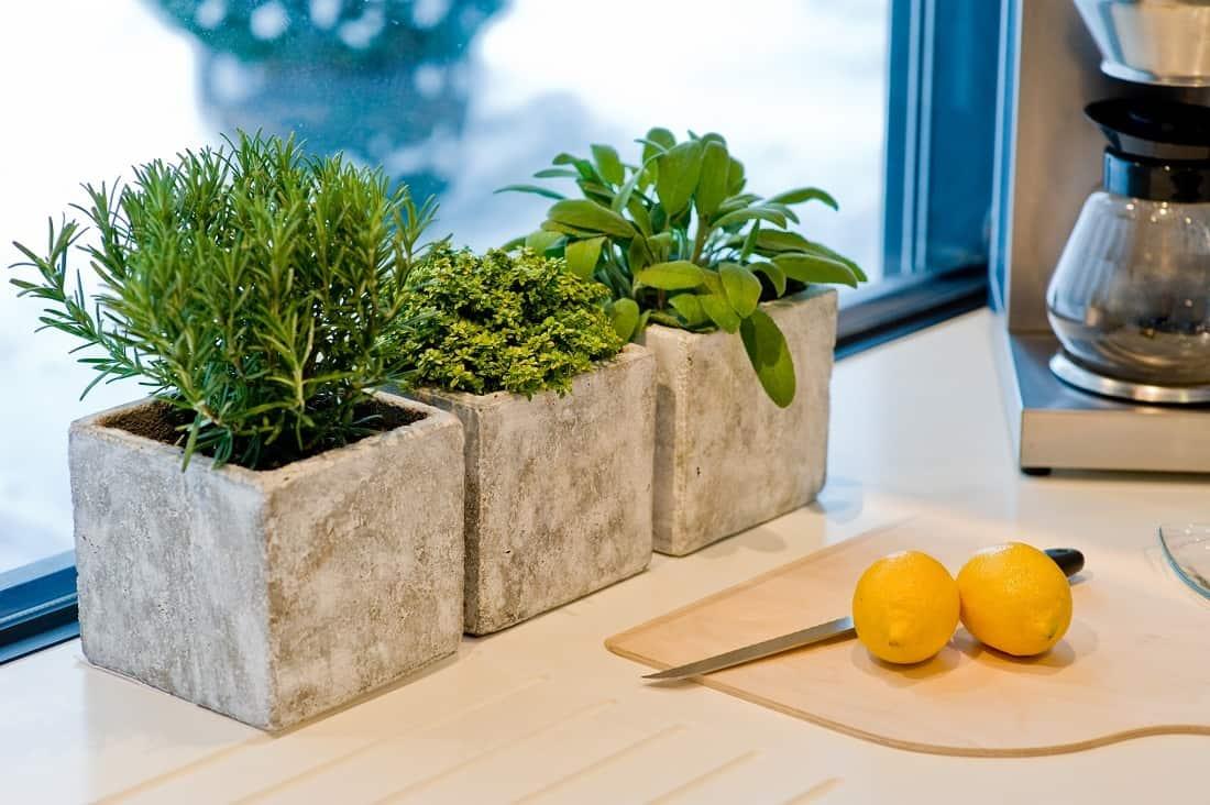 Как вырастить дыню дома на подоконнике