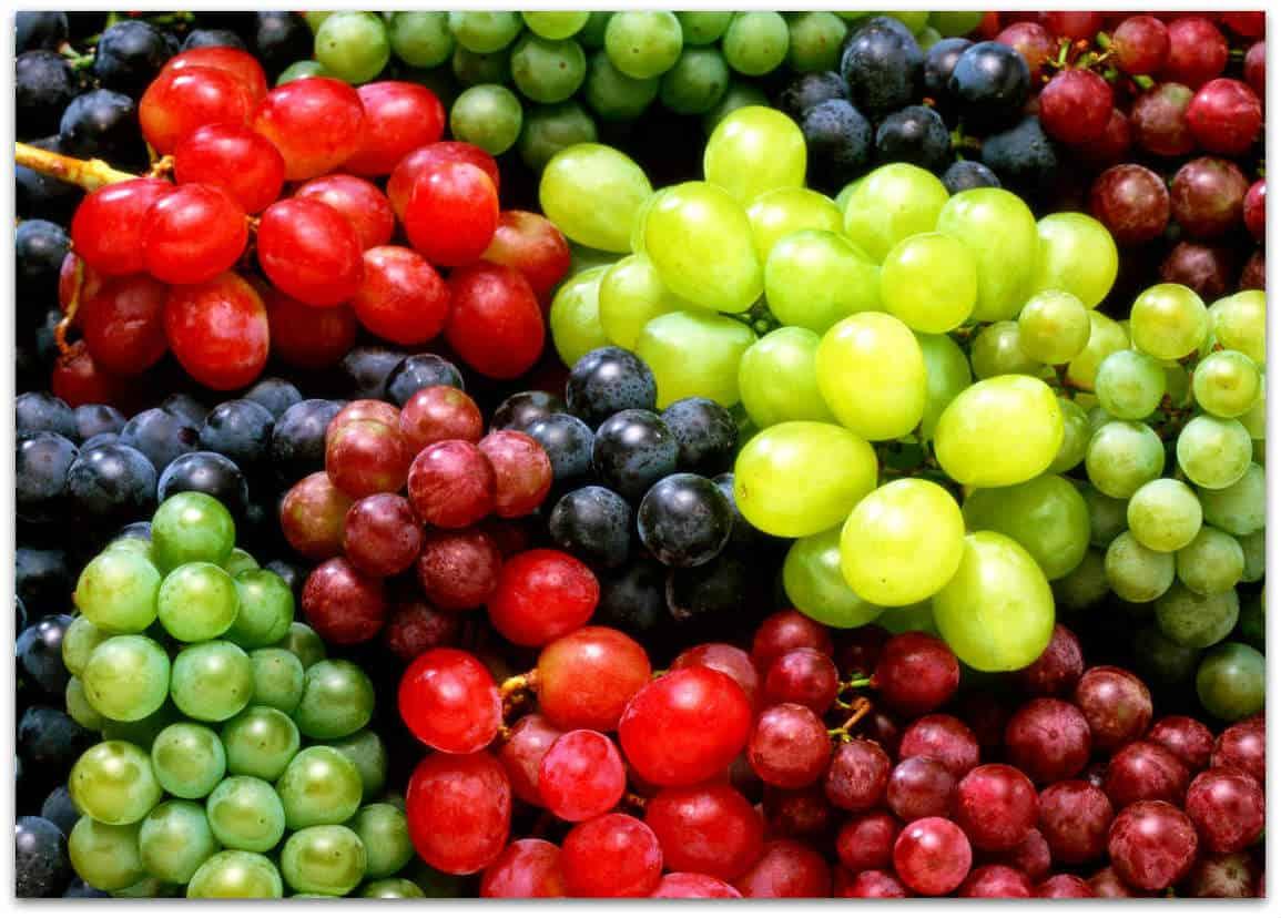 Лучшие сорта винограда с фото и описанием: от а до я по алфавиту