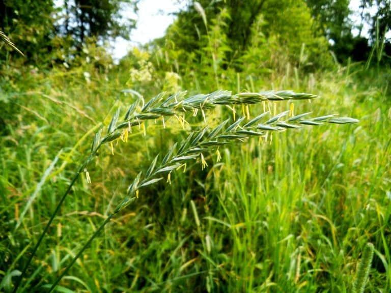 Сорные травы список описание как называются