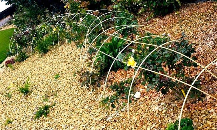 Розы: уход осенью и подготовка к зиме, обрезка и укрытие
