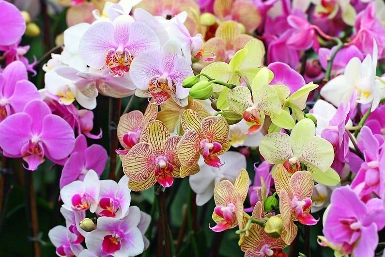Как посеять семена орхидеи в домашних условиях