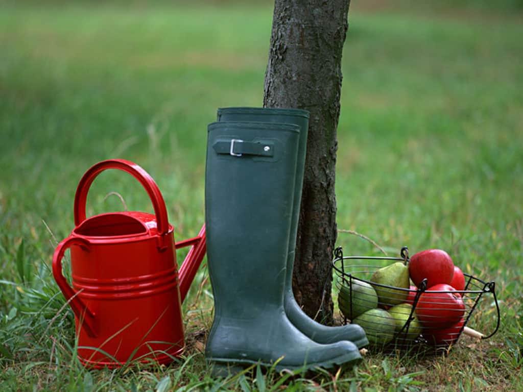 Чем подкормить плодовые деревья осенью?