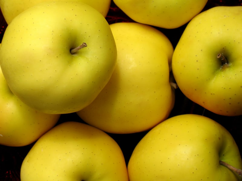 Голден дюшес яблоня описание