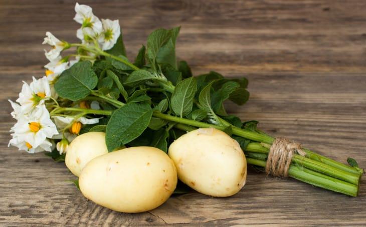 Растет ли картошка после заморозков