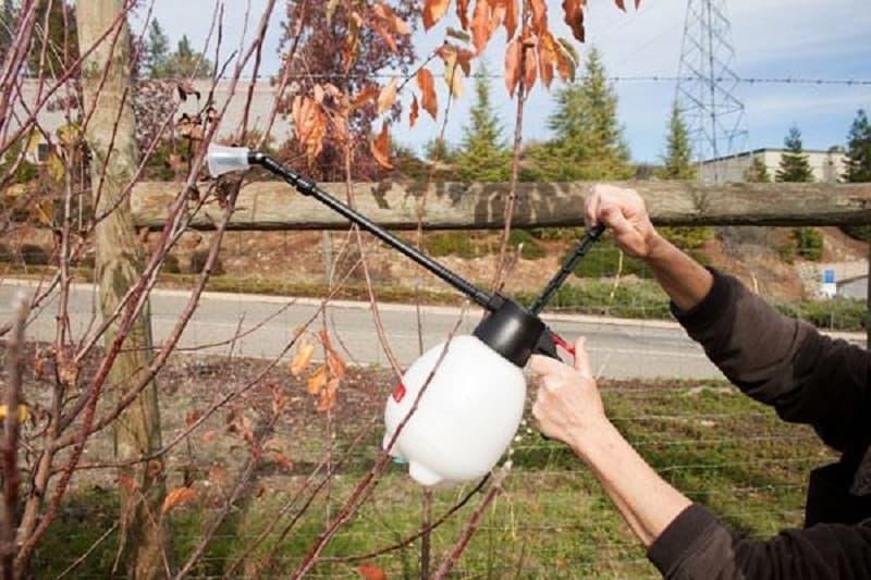 Обработка сада осенью от вредителей и болезней мочевиной