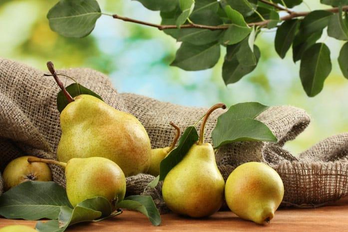 Груша Вильямс: описание и характеристика сорта, выращивание, посадка и уход