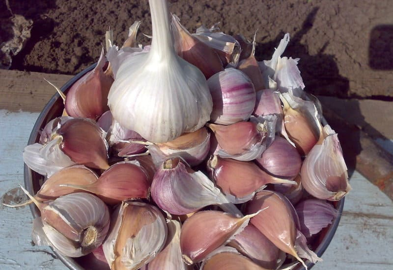 Как подготовить чеснок к посадке осенью. Как посадить чеснок осенью, чтобы он дал хороший урожай