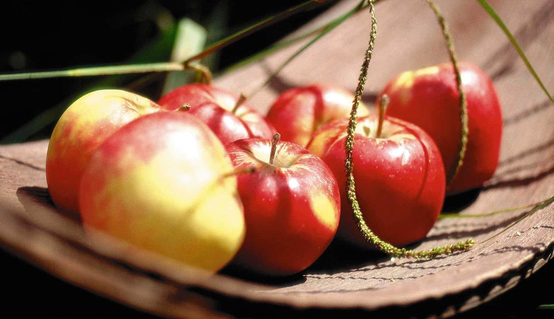 Описание и характеристика сорта яблони Солнцедар