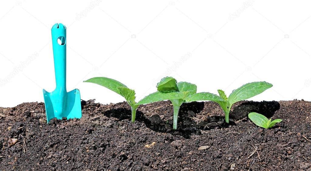 Кто ест рассаду огурцов в теплице на грядке: что делать, чем обработать
