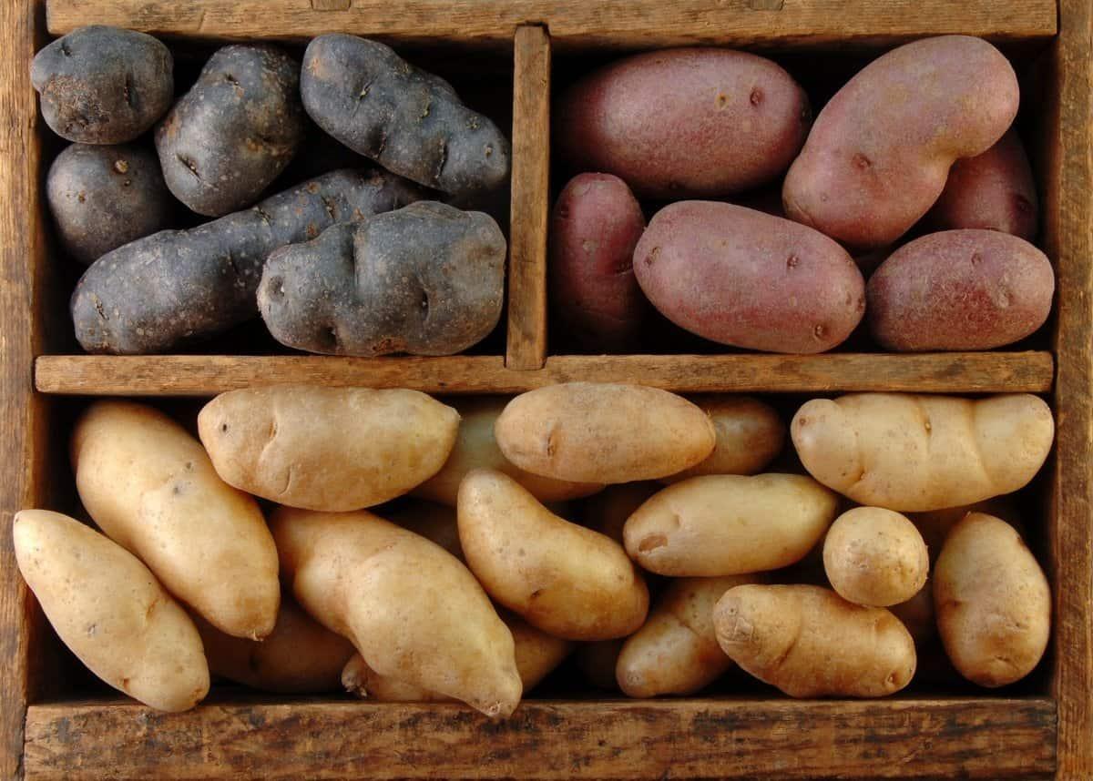Выращивание ранних и ультраранних сортов картофеля