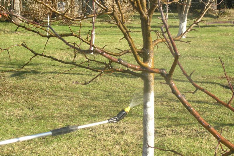 Осенняя обработка яблонь от вредителей и болезней