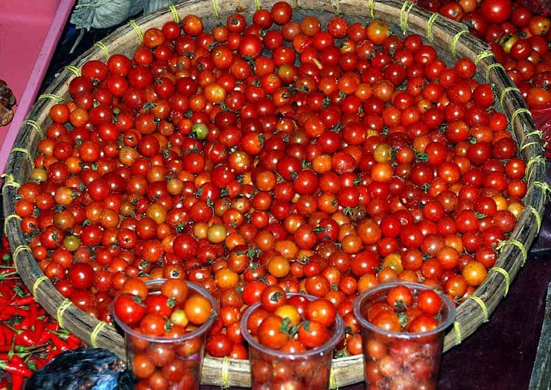 Правильная посадка и характеристика томатов рапунцель