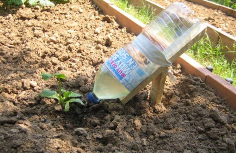 Грядка для огурцов в открытом грунте