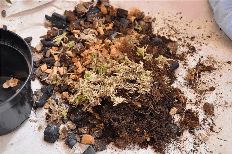 Какой грунт нужен для орхидей в домашних условиях: лучший субстрат для выращивания растений