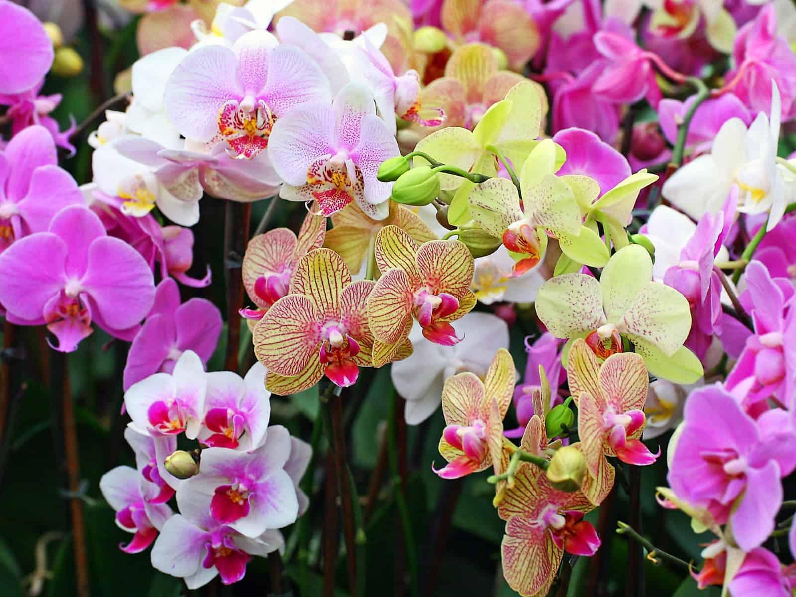 Для чего нужны воздушные корни орхидеи