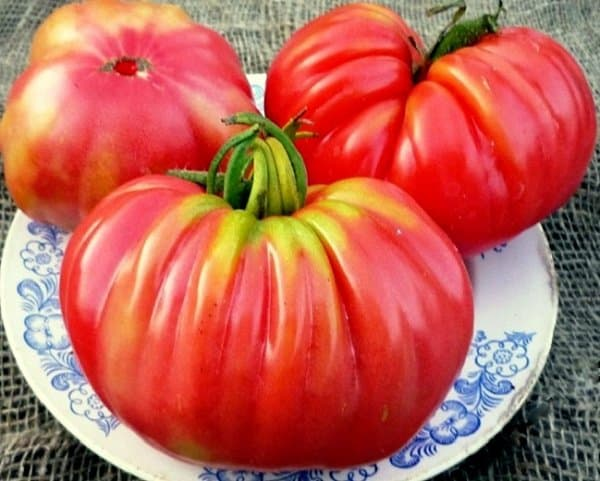 помидоры инжир описание сорта фото отзывы