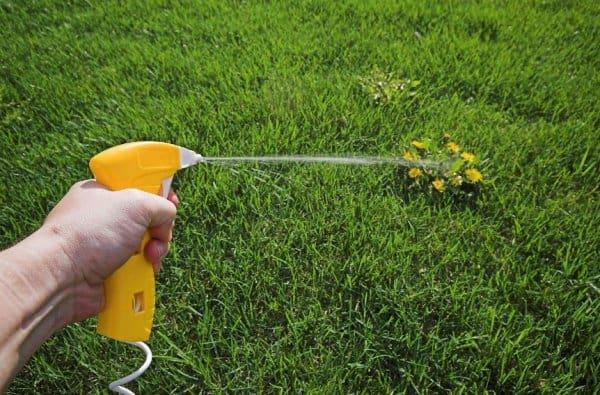 Гербицид линтур инструкция по применению от сорняков и правила обработки
