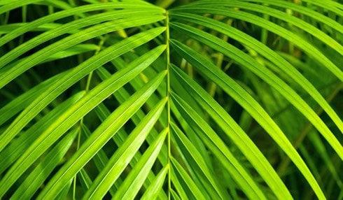 Можно ли пересаживать пальму осенью