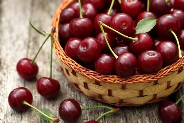 Культивирование вишни Уральская Рубиновая