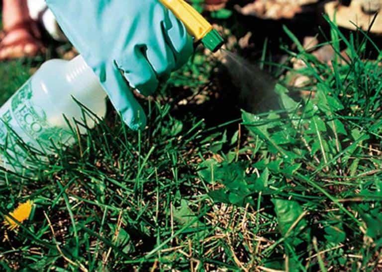 Как избавиться от травы на участке навсегда народными средствами