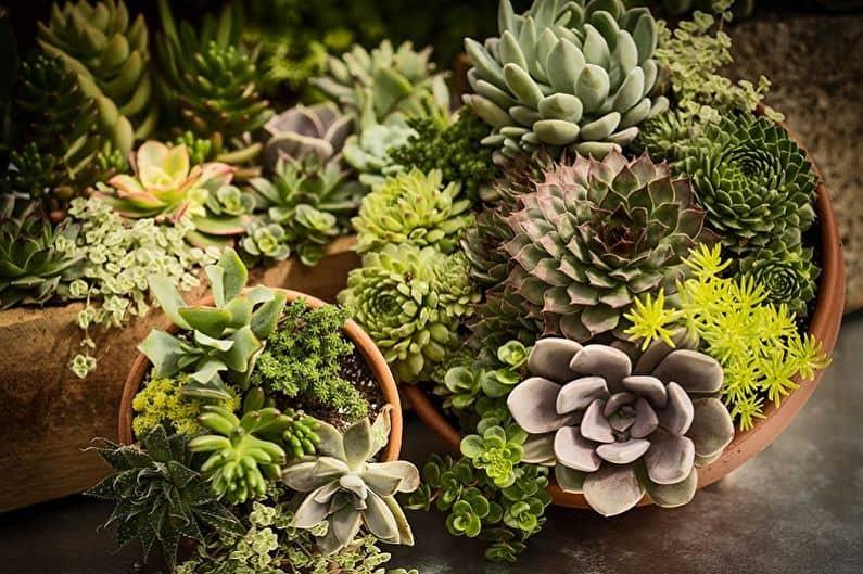 Грунт для кактусов и суккулентов в домашних условиях: какой состав нужен для полноценного роста