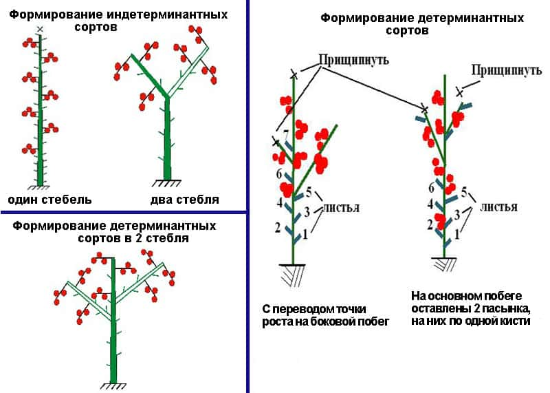 Томат клубничное дерево характеристика и описание сорта
