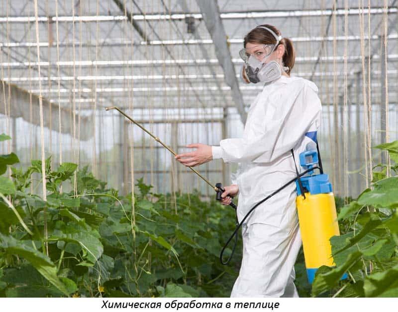 Обеззараживание почвы химические агротехнические и биологические методы