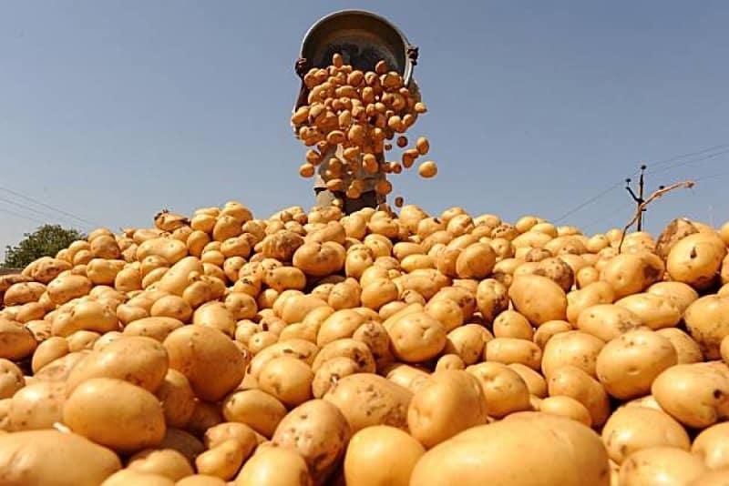 Урожай картошки с одной сотки