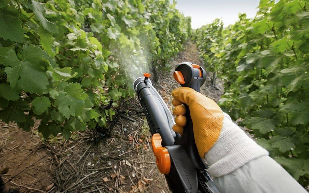 Медный купорос виноград пропорции для опрыскивания и обработки