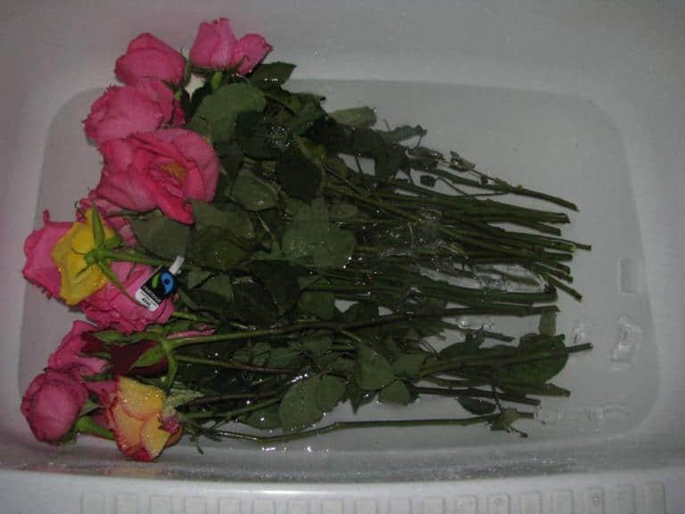 Что нужно делать чтобы розы стояли дольше
