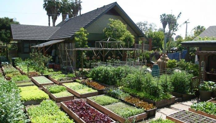 Разбиваем плодовый сад - планировка, посадка