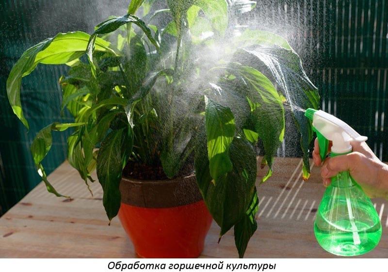Препарат атлет для рассады помидоров и перцев