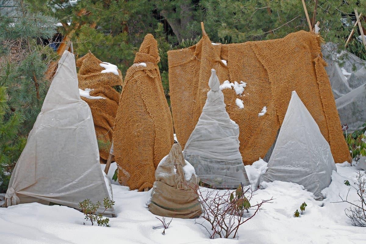 Зимовка молодых саженцев