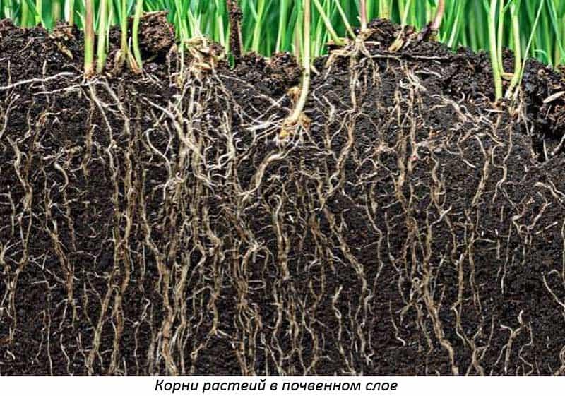 Гумус- что это такое и как увеличить его содержание в почве