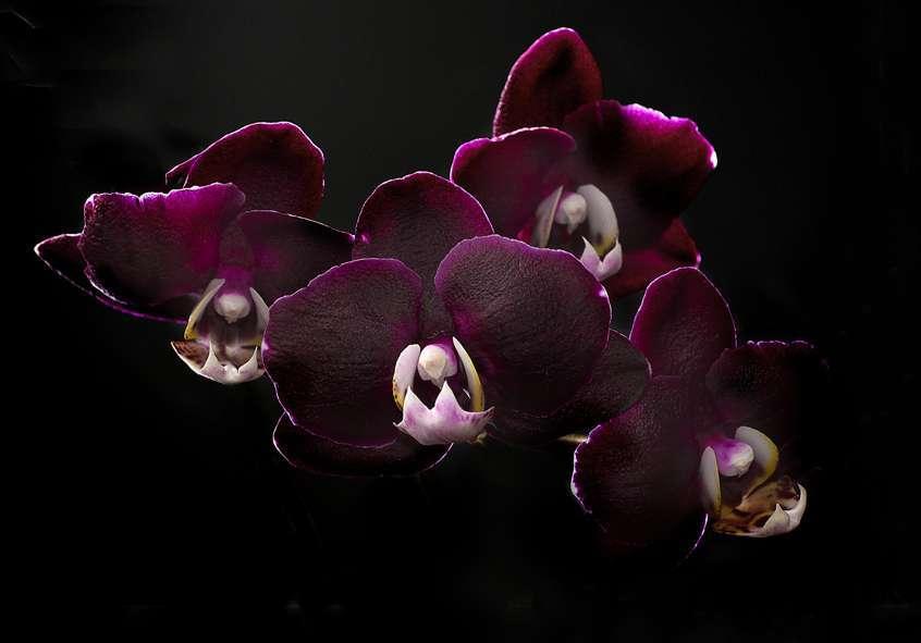 сейчас картинки орхидей в хорошем качестве черные моих стихах